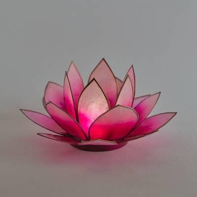 Lotosblüte Lotuslicht Nr. 5 pink Erfolg - 1
